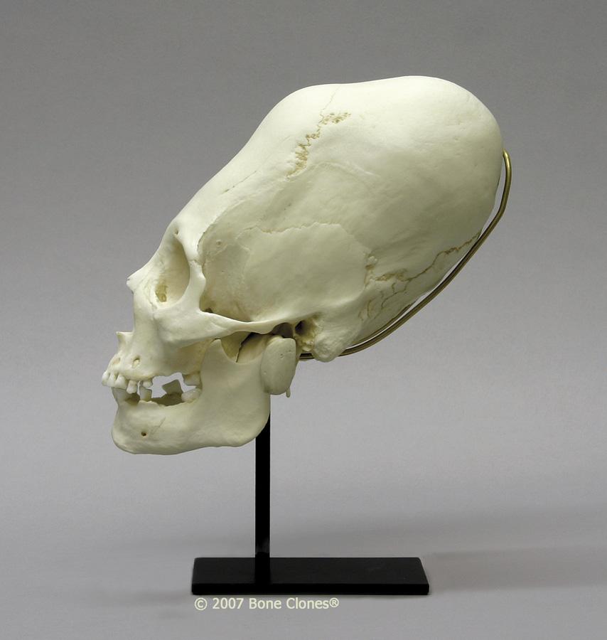 skullreplica
